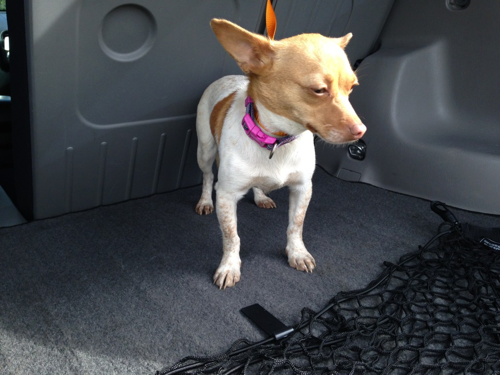 Female chihuahua, light brown and white, about 5-10 lbs, found 2/18 wandering the parking lot in the Walmart shopping center on Truxel Road. Contact Harry (916) 600-4443.