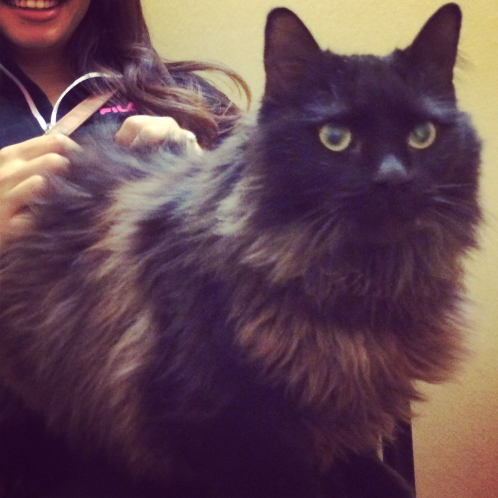 Male cat lost near North Park & Brookmere. Chipped, no collar. Contact Liz at  (707) 290-0859.
