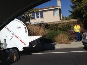 Seen in Natomas: Tumbleweed Cleanup Crew