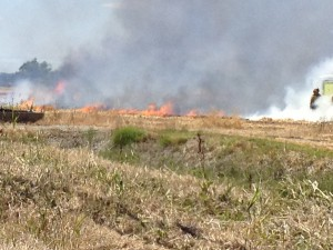 Firefighters Battle Grass Fire in Natomas