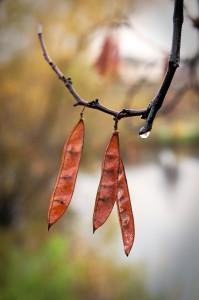 Seen in Natomas: First Rain of the Season
