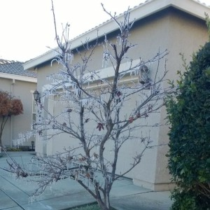 Seen in Natomas: ICICLES!
