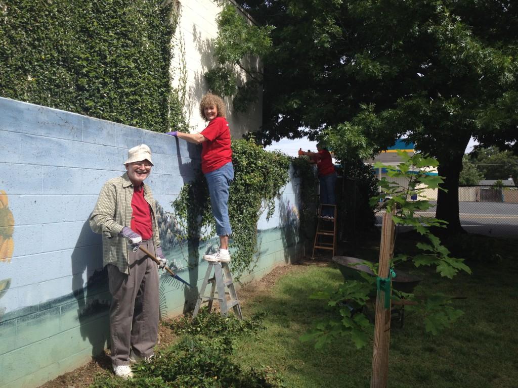 Volunteers cut away vines to reveal a treasured mural.