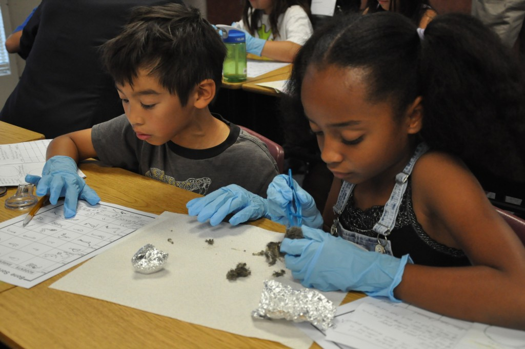 Students in Nicole Swonger's 4th grade class at Witter Ranch Elementary School dissect owl pellets. / Courtesy Photo