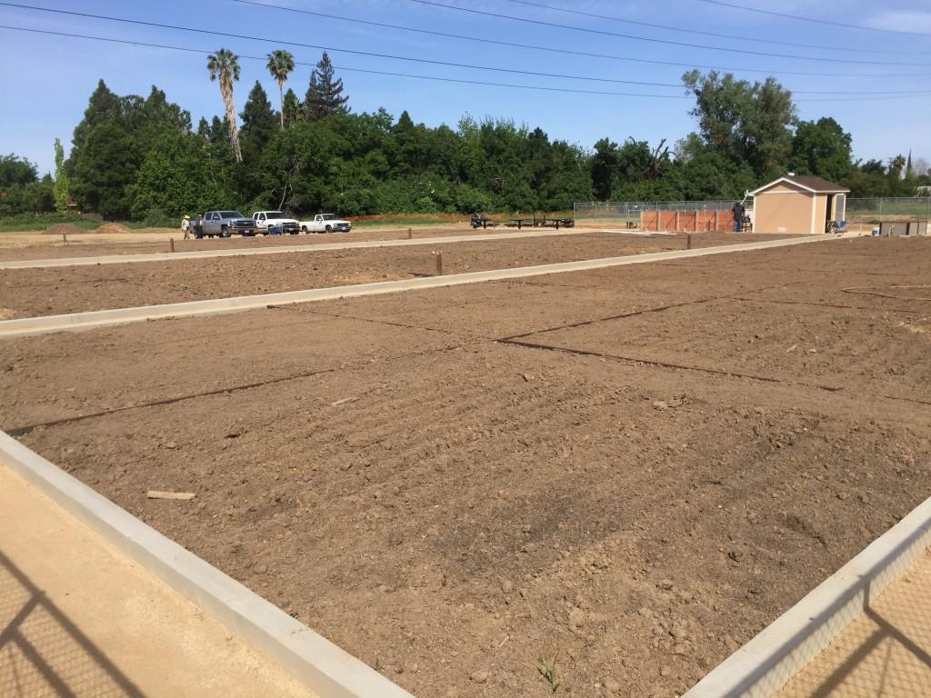 garden_new plots