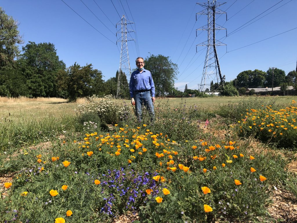 Image of orange poppies and other flowers in foreground with Jeff Harris standing in the background.
