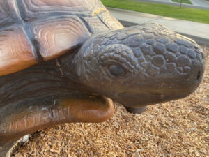 Image of a large tortoise head.